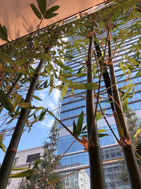「Apple丸の内」の特長のひとつ。日本竹を内装に使った店舗デザイン